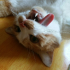 多疑的猫猫