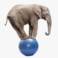 elephantproducer