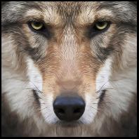 wolmasd